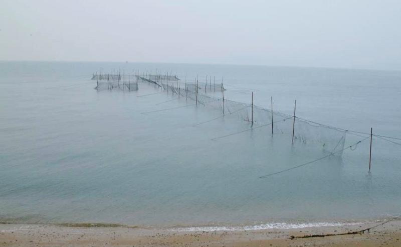 定置網漁業